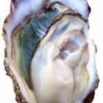 青空レストラン クレールオイスター/塩田熟成牡蠣の通販/お取り寄せ@広島県大崎上島 12月30日