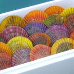 ヒオウギ貝(ひおうぎ貝)の通販/お取り寄せ 青空レストラン@愛媛県愛南町 4月28日